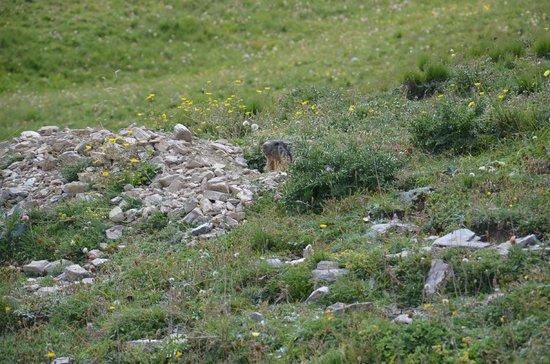 Les Villages Clubs Du Soleil Montgenevre : Marmotte