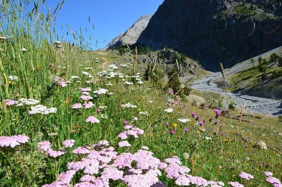 Les Villages Clubs Du Soleil Montgenevre : Petites fleurs