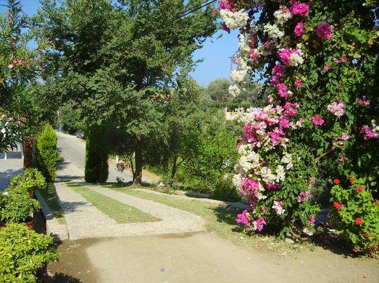 Onur Motel: Garden