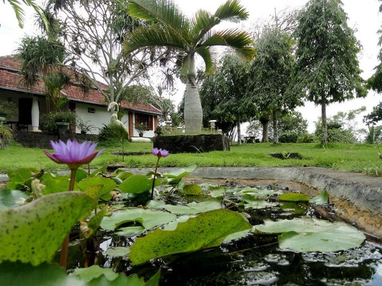 Shanthi Lanka Ayurveda Resort: Pond in the Garden