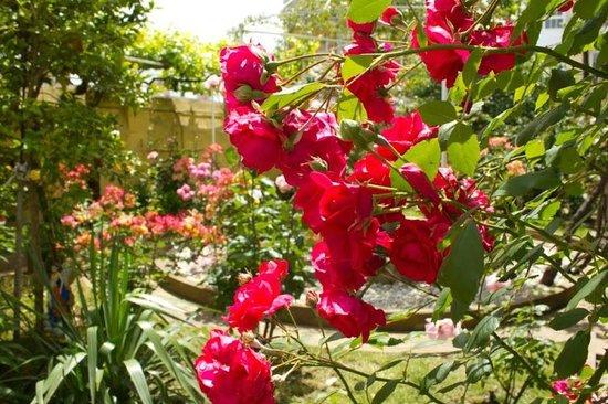 Albergue Don Alvaro: explosión de color en el jardín
