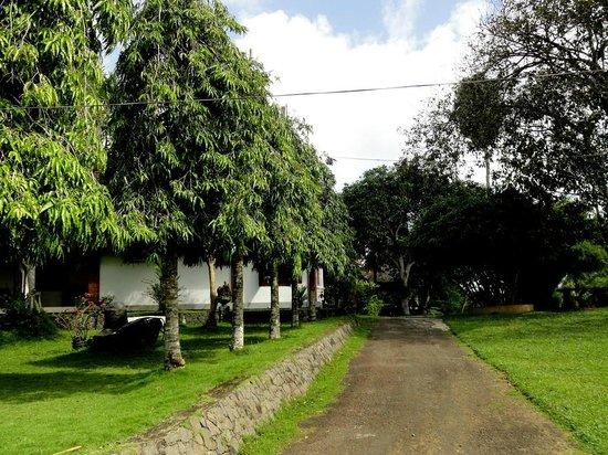 Shanthi Lanka Ayurveda Resort: Road to Shanthi Lanka