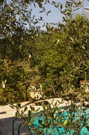 Castello Vertine: View from the garden