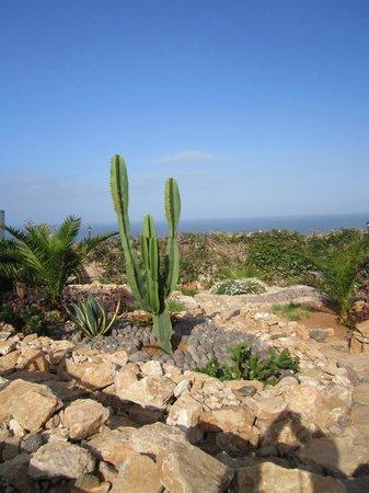 Aftas Trip: Vue du jardin