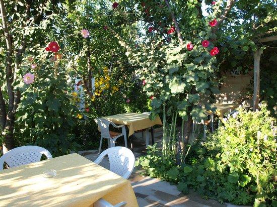 Kemal's Guest House : garden