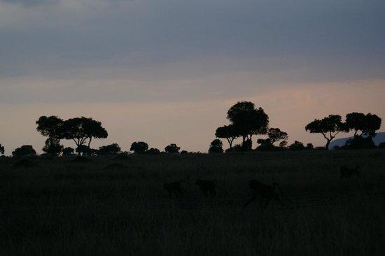 Royal Mara Safari Lodge: beautiful sunsets