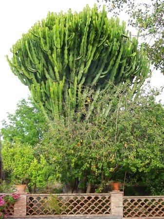 Agriturismo Terrenia : ein kleines grünes Paradies