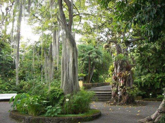 Jard n botanico picture of botanical gardens jardin botanico puerto de la cruz tripadvisor - Botanical garden puerto de la cruz ...