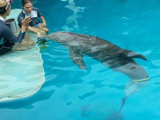 Hope One Of The Rescued Dolphins Putting On A Show