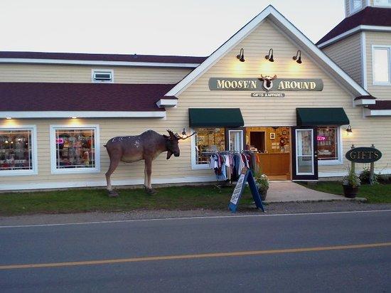 Fundy National Park: Moose'N Around in Alma