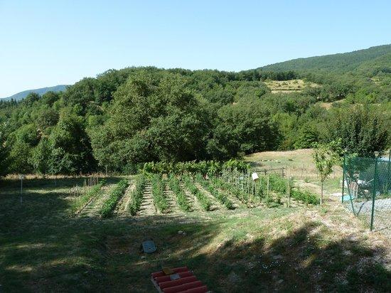 Agriturismo Il Castelluccio Country Resort: le potager...