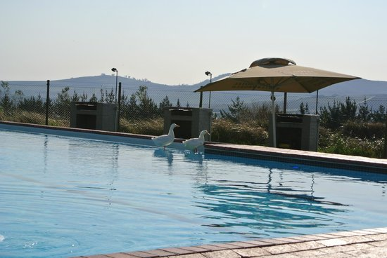 Protea Hotel by Marriott Stellenbosch: The unheated pool