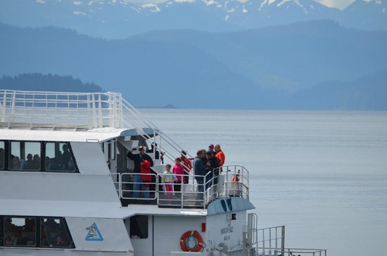 Icy Strait Point - Whale & Marine Mammals Cruise