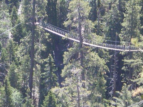Big Pines Zipline Tours: Bridge number 1