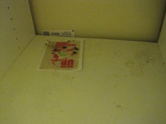 Algonquin Lakeside Inn: 'Ant trap' under sink