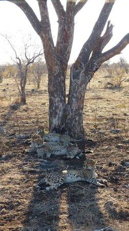 Mosetlha Bush Camp & Eco Lodge: Cheetahs