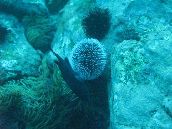 Hostal Altamar: underwater image