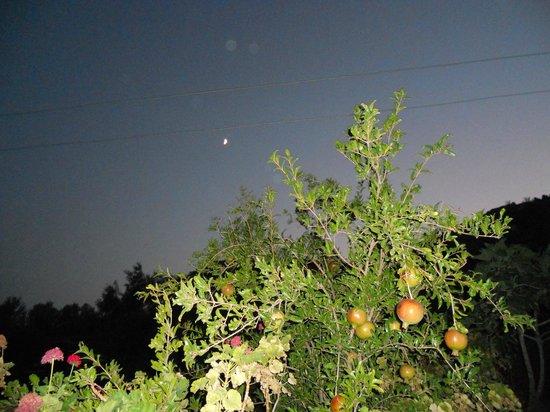 Datca Ciftlik Evi: ay doğmuş bile nar ağacının üstüne...