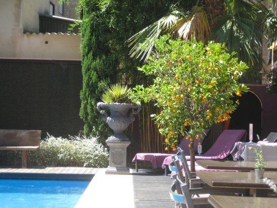 L'Avenida: pool area