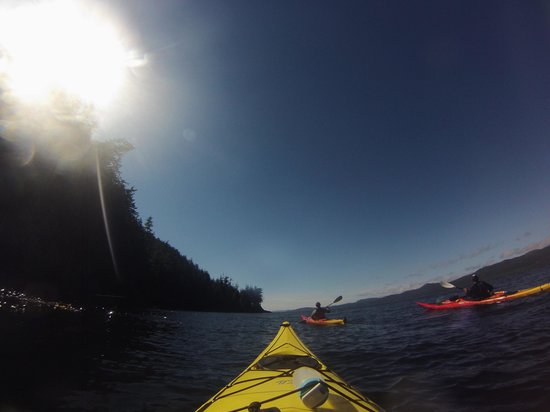 Wildcoast Adventures - Day Tours: Kayaking at Orca Camp
