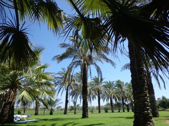 Blue Waters Club: Palmen
