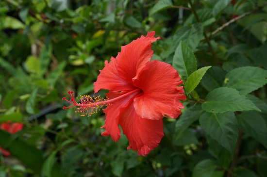 Community Residence Siem Reap: A flower on the grounds