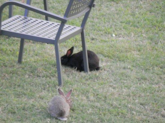 Relais sul Lago: les petits lapins sympas