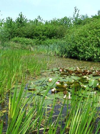 Amelia Trust Farm: Pond