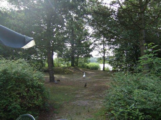 Center Parcs De Kempervennen: View from our Cottage (938)