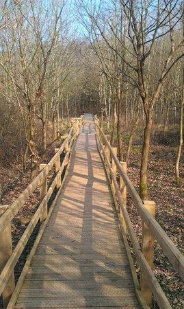 Amelia Trust Farm: Paths