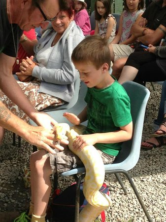 Animalarium at Borth: My grandson loved the snakes