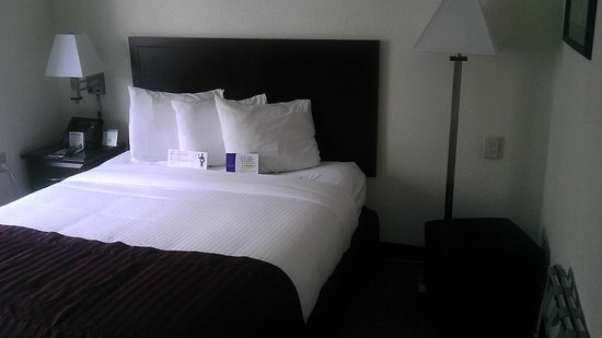 Jacksonville Plaza Hotel & Suites: Queen bed