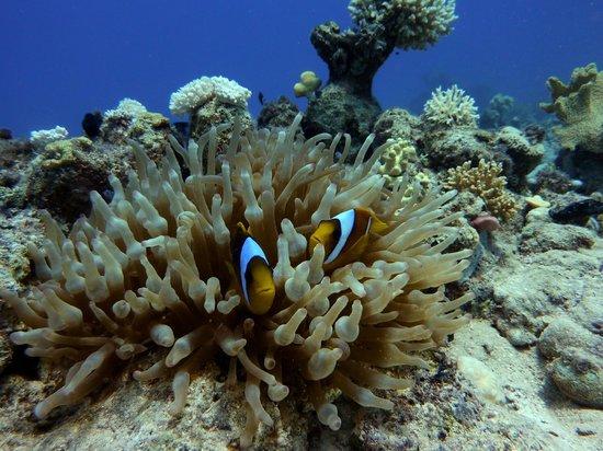Diving Center Dive Club Italiano: Clown@Sharm