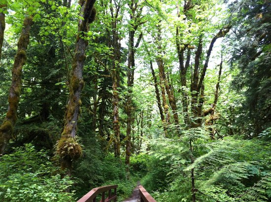 Backeddy Resort & Marina: Der Wald in der Umgebung des Resorts