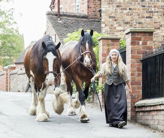 Blists Hill Victorian Town : Beautiful Shire Horses which can also be seen pulling a cart