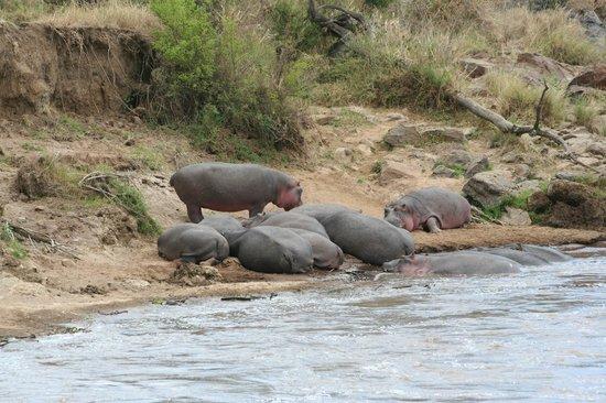 Mara Crossings Camp: Sun bathing!