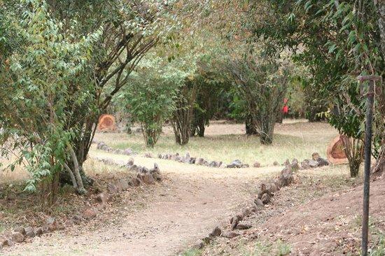 Mara Crossings Camp: grounds
