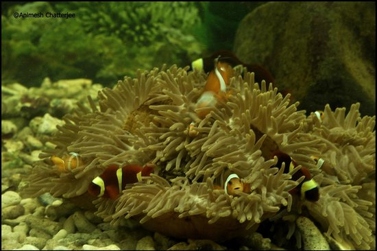 Andaman and Nicobar Islands, India: Live Coral