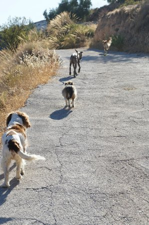 La Finca del Castillo Arabe: All the dogs out for a walk