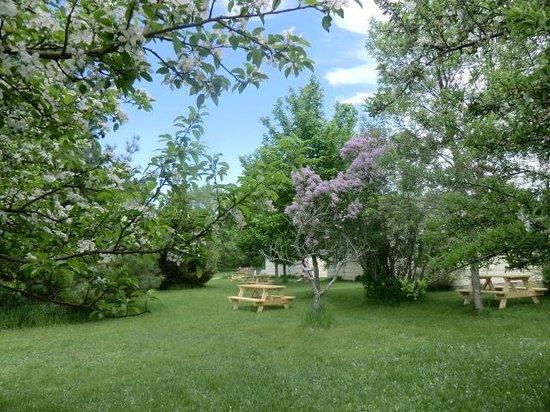 Wayfarer Lodgings: the backyard