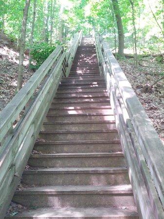 Sanctuary Woods