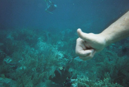 Agape Cottages : Snorkeling on The Aristocat