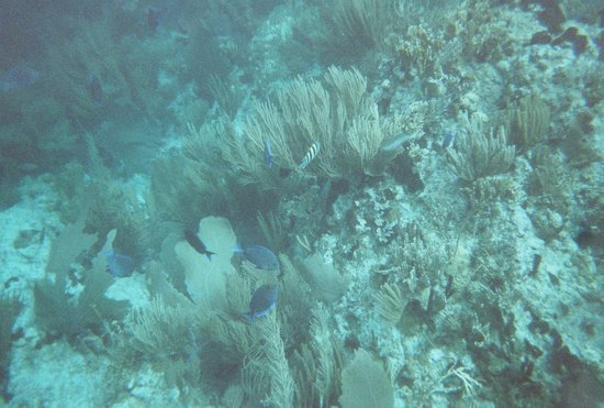 Agape Cottages: snorkeling at the Indians on the Aristocat