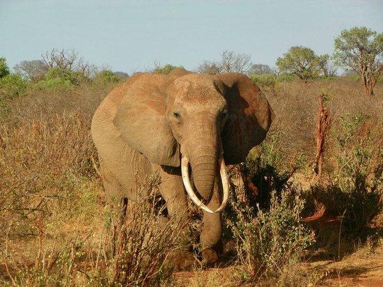 Morris Safari Kenya - Day Tours: parco nazionale amboseli