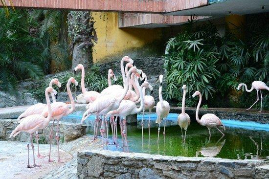 Expanzoo Expansion Centro Educativo Recreacional: Flamingos