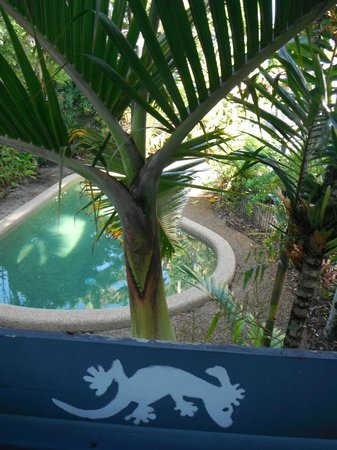 Gecko's Backpackers: Swimming pool