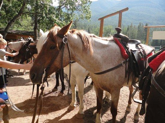 Banff Trail Riders - Day Rides: Splash