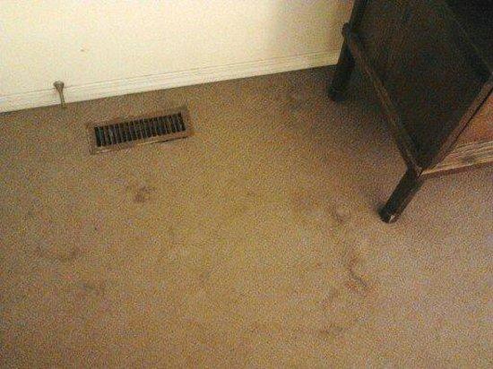 Badlands Motel: Carpet was filthy
