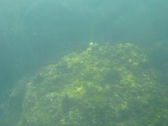 Looking Glass Tours: Underwater vegetation.