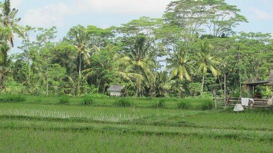 Bali Bintang Bike Tours: Beautiful scenery